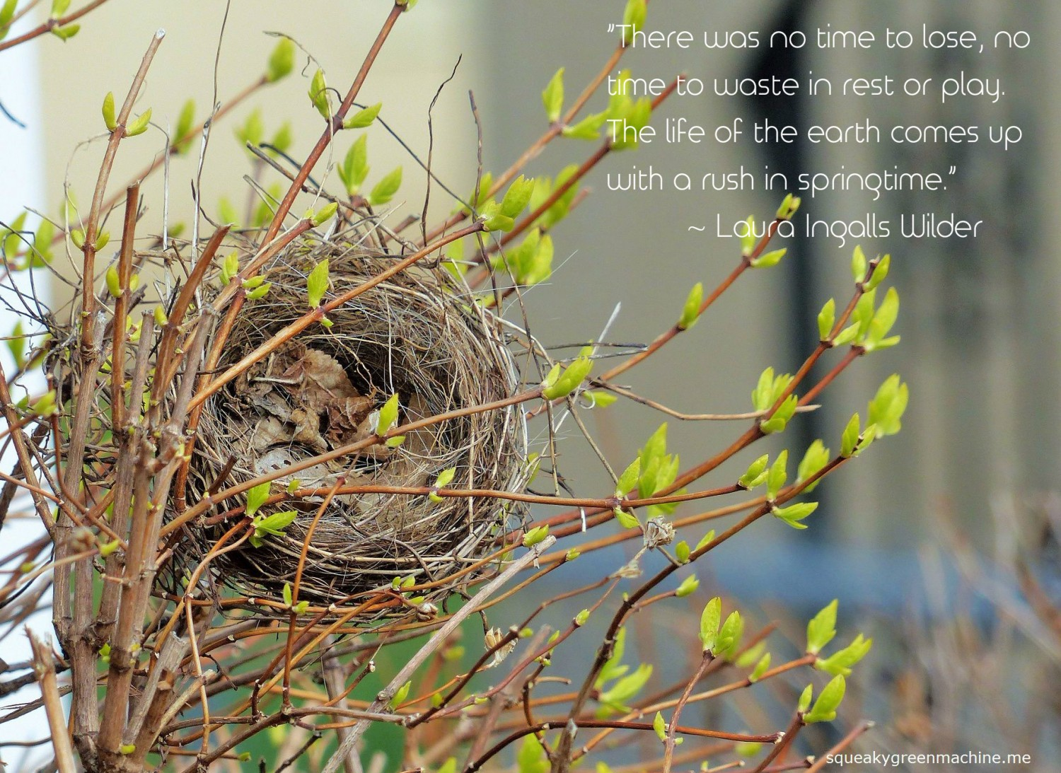 "a bird's nest nestled between spring buds with the laura ingalls wilder quote: ""There was no time to lose, no time to waste in rest or play. The life of the earth comes up with a rush in springtime."