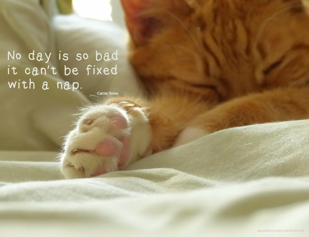 """Sleeping cat with """"No day is so bad that it can't be fixed with a  nap."""" Carrie Snow Quote"""