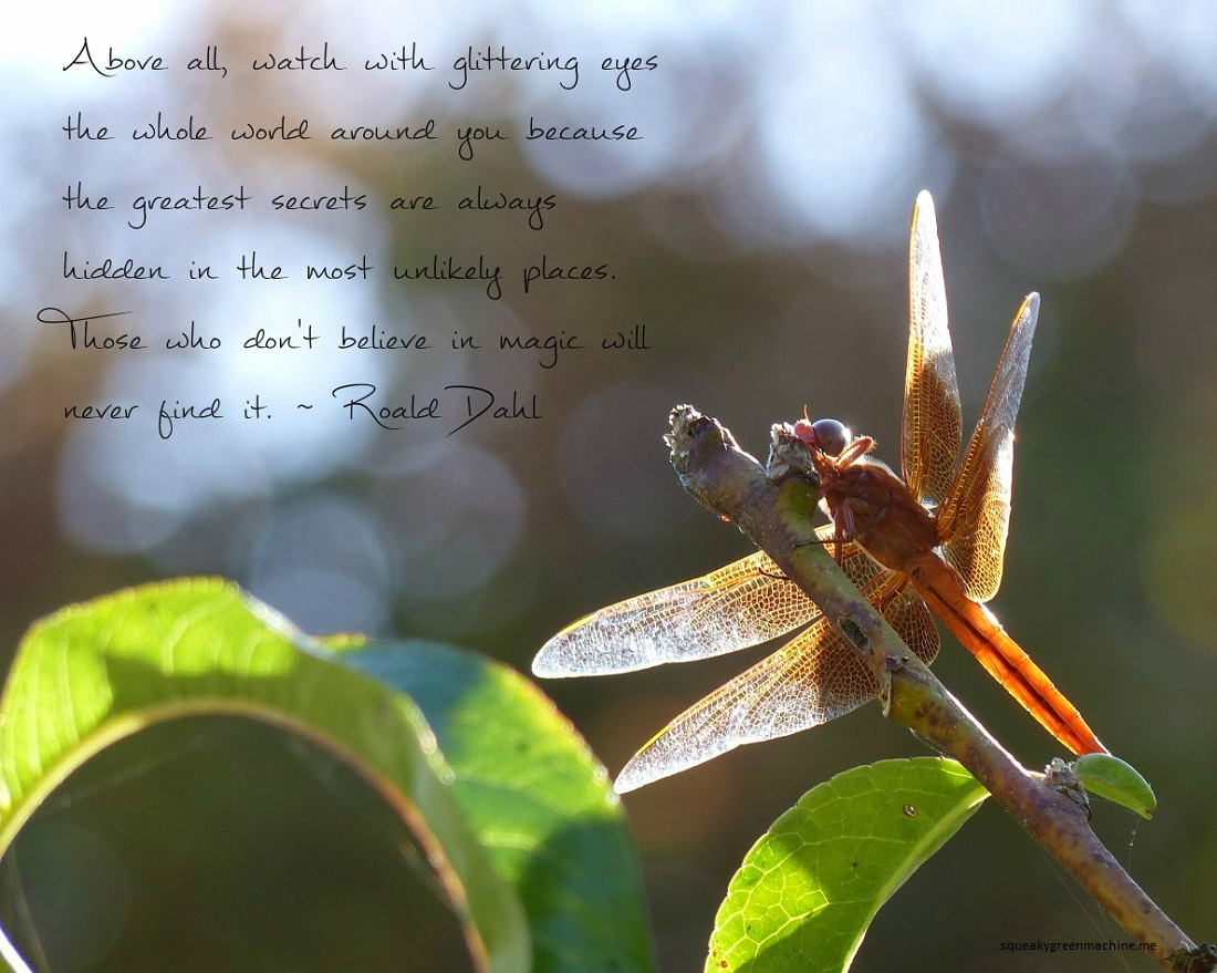 Dragonfly with the Roald Dahl quote: Above all, watch with glittering eyes the whole world around you because the greatest secrets are always hidden in the most unlikely places. Those who don't believe in magic will never find it.
